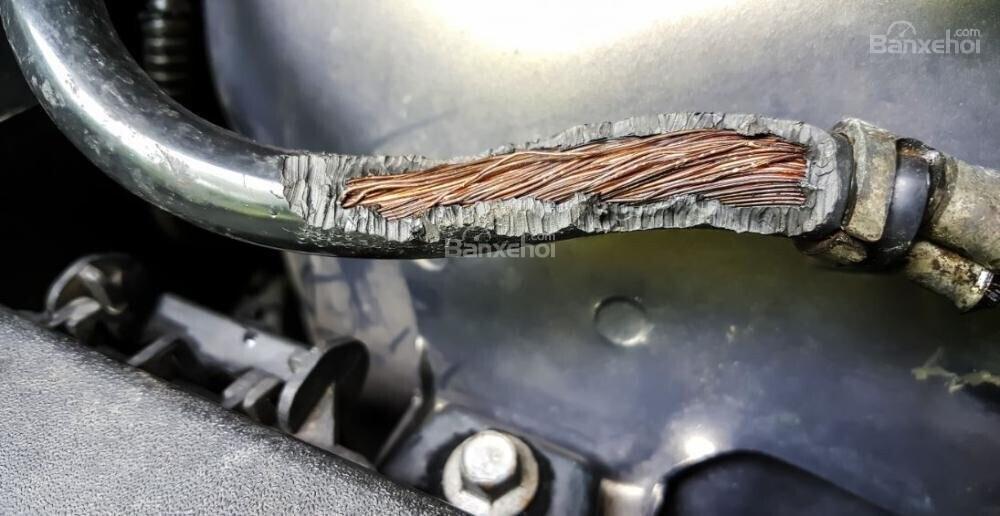 Dây điện bọc đậu tương: Nguyên nhân thu hút chuột cắn phá xe - 2