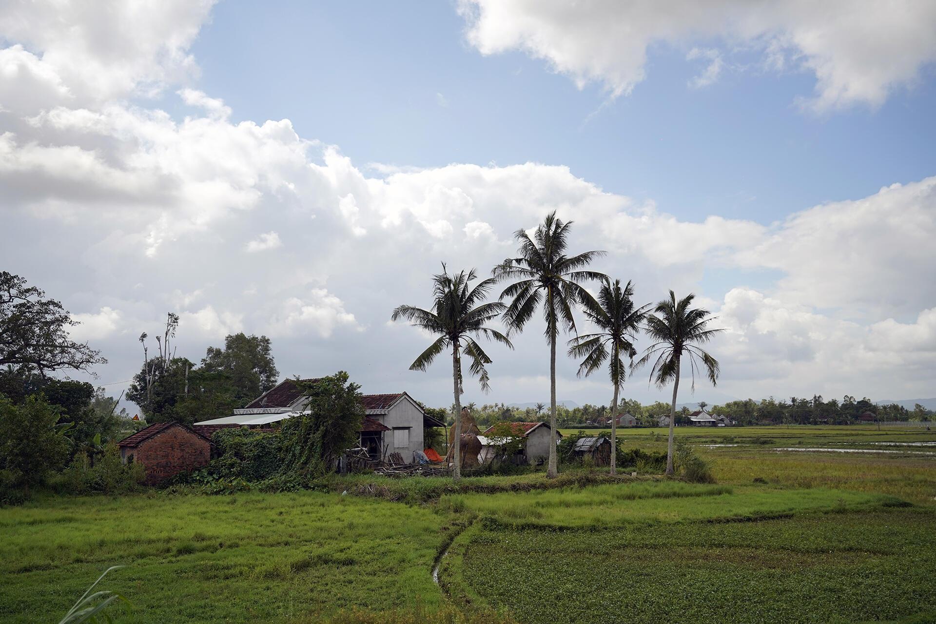 Nào là ruộng, dừa và xa xa là dãy núi, nhìn sướng mắt vô cùng mỗi lần đoàn dừng lại