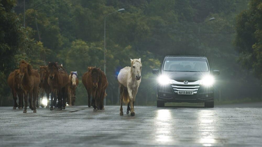 Honda Odyssey – Chuẩn mực mới cho xe gia đình tại Việt Nam - Hình 16